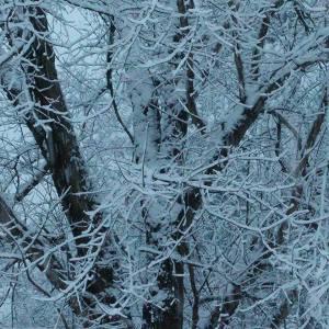 Winter 12-9-17