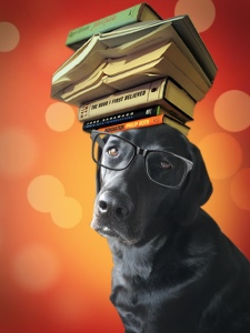 BookDoggy 1